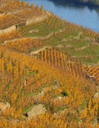 Le Rhône et les vignes en novembre 2020