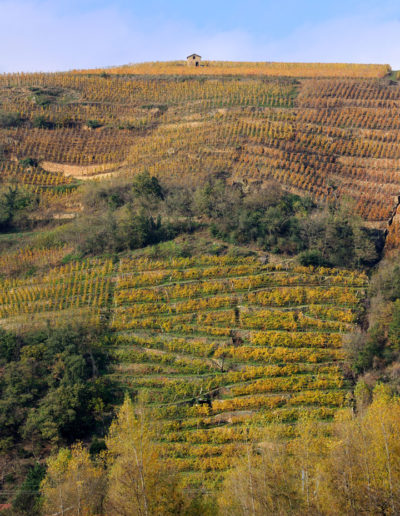 Vue du domaine Julien Pilon à travers les vignes